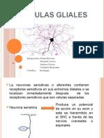 Neuro Glia