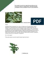 10 Plante Toxice