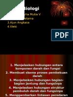 Sistem Peredaran Darah Manusia Sheren