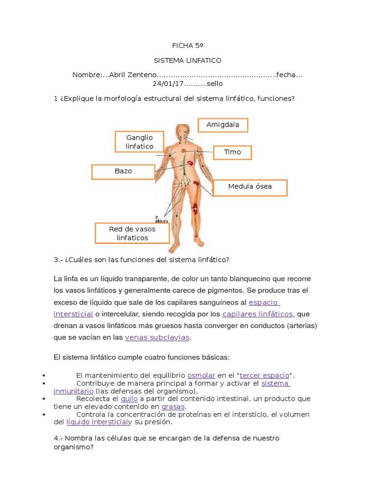 Famoso Mapa De Los Ganglios Linfáticos En El Cuerpo Molde - Anatomía ...