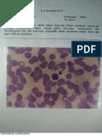 Histologi Darah