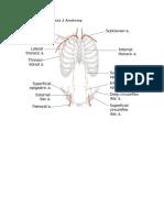 Review - Anatomy Quiz 2