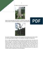 Heritage Trees of Kanyakumari District.docx1