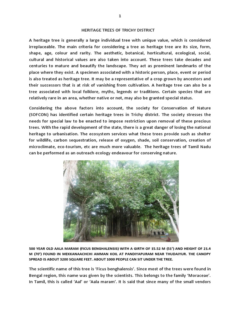 Heritage Trees of Trichy District | Mango | Trees