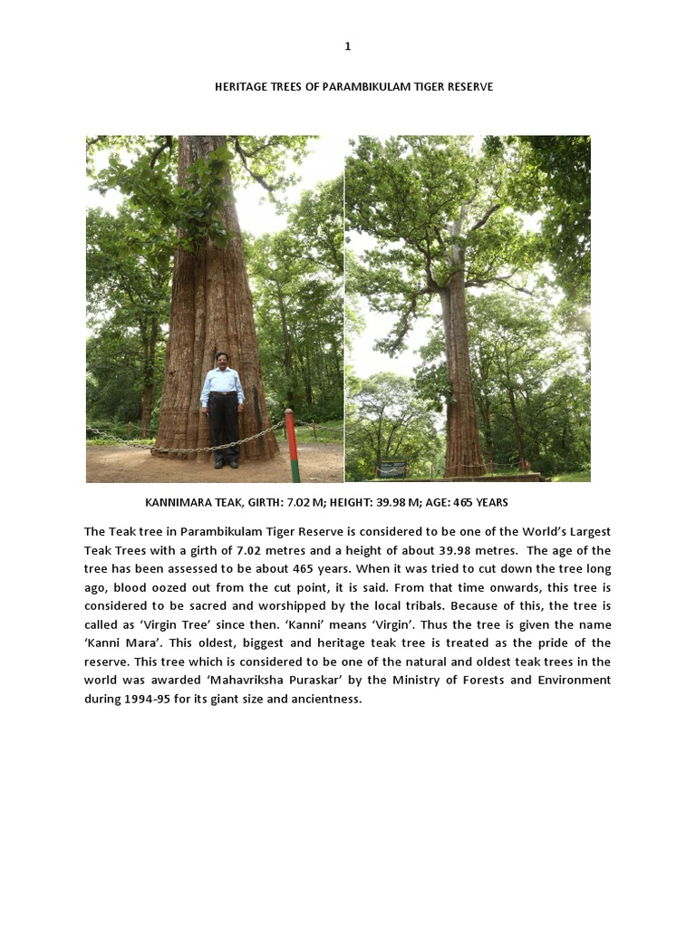 Heritage Trees of Parambikulam Tiger Reserve (PTR) | Trees