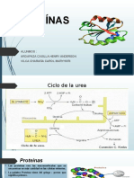 Proteínas Expo