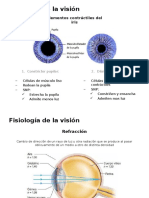 Fisiología de La Visión