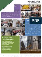 2016-1T Jornal Do Lar - #6 O Girassol