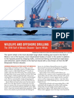 Wildlife and Offshore Drilling Sperm Whales