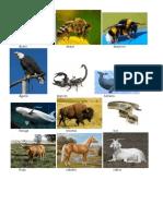 5 Animales Por Cada Letra Del Abecedario