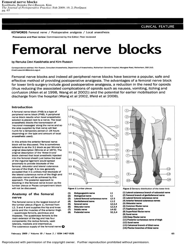 femoral nerve blocks.pdf, Muscles