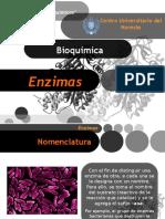 bioquimica enzimas