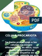# 3 eucariotas y procariotas.pptx
