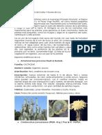 Especies Endemicas de Flora y Fauna en Ica