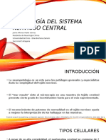 Histología Del Sistema Nervioso Central