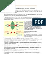 PRACTICA 5 Comprobación de Clorofila y Fotosíntesis
