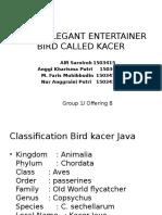 BLACK ELEGANT ENTERTAINER BIRD CALLED KACER.pptx