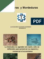 8.Picaduras y Mordeduras