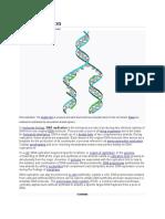 DNA replication.docx