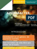 Azotobacter Expo Suelos
