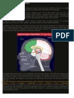 Córtex Cerebral - Funcionamento