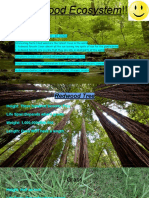 finished  redwood ecosystem