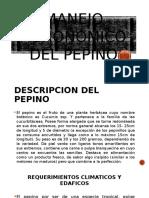 Manejo Agronómico Del Pepino (PRESENTACION)