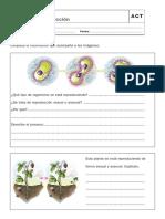 ESQUEMAS PARA RELLENAR.pdf