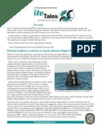 Fall 2009 Kite Tales Newsletter Great Florida Birding Trail