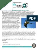Winter 2008 Kite Tales Newsletter Great Florida Birding Trail