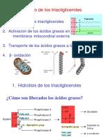 Beta Oxidacion Bioquimica II 2016
