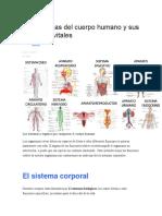 Los sistemas del cuerpo humano y sus funciones vitales.docx