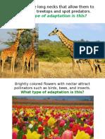 adaptations mimicricy camo migration