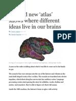 WP - Brain Atlas