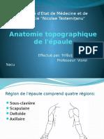 Anatomie Topographique de l'Épaule