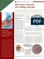 cartilago_articular.pdf