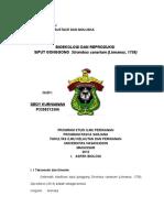 Dedy Kurniawan (P3300212506)