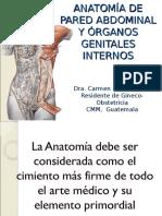 Anatomia Pelvica