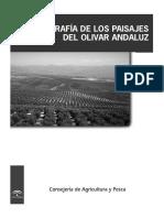 Geografia Del Olivar Andaluz Alta