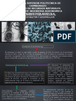 Expo Microbiologia Azotobacter and Azospirillium