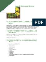 Hierba de San Juan O Hipericum Perforatum