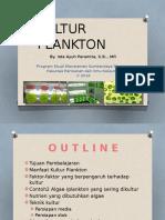 Kultur Plankton