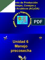 APICULTURA PRE COSECHA