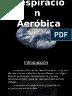 respiracion aerobica