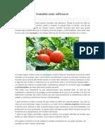 Como Plantar Tomates Mas Sabrosos