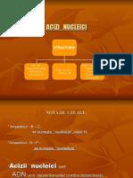 Proiect Acizi Nucleici