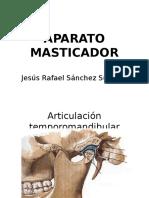 AP. Masticador - PPT