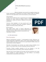 GUÍA DE FÓSILES.pdf