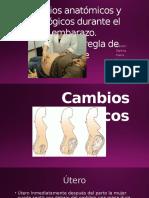 Cambios-anatómicos