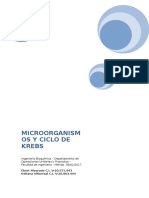 Microorganismos y Ciclo de Krebs